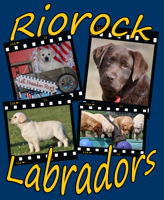Riorock Labrador Retrievers Breeders East Coast area, Formerly Colorado